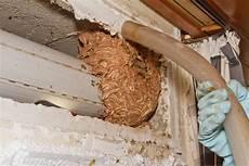 professionelle umsiedlung wespen und hornissen erik