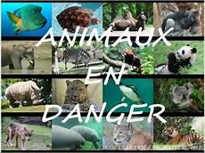 les animaux en voie de disparition sauver les animaux menac 233 s