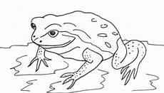 8 beste ausmalbilder frosch vorlage kostenlos drucken