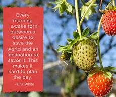 for you worksheets 18525 every day is earth day for ncbbi innkeepers strawberry health benefits strawberry fruit fruit