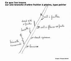 Ils Et Elles Taillent Fruitiers Et Rosiers Chroniques
