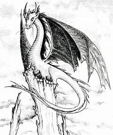 Drachen Schwarz Weiß - drache schwarzweiss abbildung stock abbildung