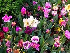 Les Belles Fleurs Du Monde L Atelier Des Fleurs