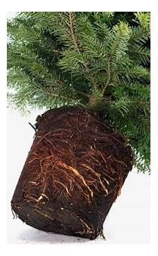 choosing maintaining your tree go to 4 gardening
