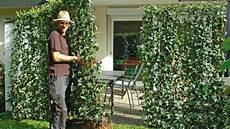 sichtschutz aus pflanzen f 252 r garten und terrasse