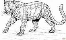 Malvorlagen Tiger Hill Walking Clouded Leopard Coloring Page Free Printable