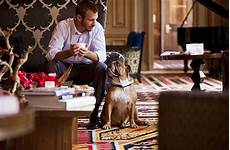 the 7 best pet friendly hotel chains fodors travel guide