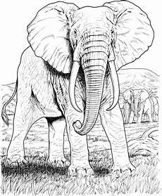 pin j f auf malvorlagen wildtiere elefantengesicht