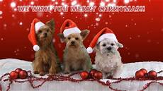 merry christmas greeting video not only for pet youtube