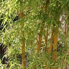 zimmerpflanzen datenbank giftige ungiftige pflanzen f 252 r katzen bilder datenbank
