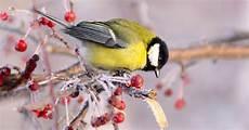 einheimische vögel im winter v 246 gel im winter richtig f 252 ttern antenne bayern