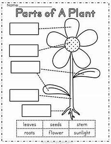 science worksheets for nursery class 12314 plant a garden science and writing parts of a plant kindergarten science plant lessons