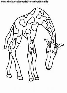 Ausmalbilder Kostenlos Ausdrucken Giraffe Ausmalbilder Giraffe Kostenlos Malvorlagen Zum