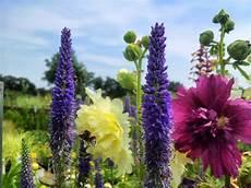pflanzen für bienen und schmetterlinge nektar oase das paradies f 252 r bienen und