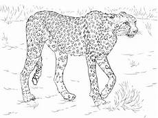 cheetah coloring pages free printable cheetah coloring pages
