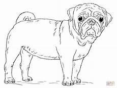 Malvorlage Hund Mops Mops Ausmalbilder Ausmalbild Club
