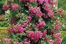 elpflanzen und hängepflanzen garten bl 252 hende kletterpflanzen ansprechende highlights