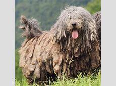 11 Oddball Dog Breeds that Show Nature's Excellent Sense