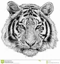 trekt de tijger hoofdhand ge 239 soleerde illustratie stock