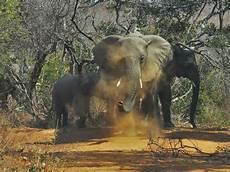 les animaux en voie de disparition comment prot 233 ger les animaux en voie de disparition