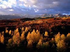 Gambar Pemandangan Indah Di Hutan Yang Alami Dan Sejuk