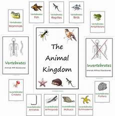 animal kingdom worksheet for grade 1 14255 our animal kingdom notebooks with printable materials