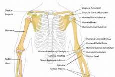Das Brustbein Anatomie Funktion Beschwerden 187 Krank De
