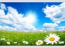 Free Spring Wallpaper And Screensavers   WallpaperSafari