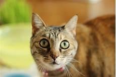 Angst Vor Katzen So K 246 Nnen Sie Die Ailurophobie 252 Berwinden
