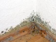 Schimmel Ecke Außenwand - risiko schimmelbefall am dach dein bauguide