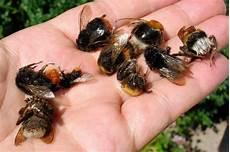 landwirtschaft f 252 r insektensterben verantwortlich