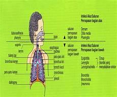 Ispa Infeksi Saluran Pernafasan Akut Ikanpaus09