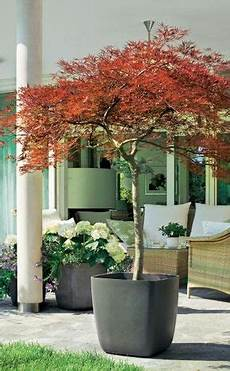 Winterharte Geh 246 Lze F 252 R Die K 252 Belbepflanzung Garten