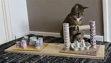 katzenspielzeug selber basteln toilettenpapierrollen eierkartons fummelbrett katze