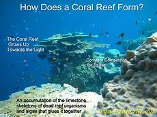 great barrier reef facts new horizon sail dive