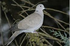 pic anti pigeon jardiland