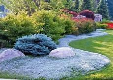 3 quot etoiles bleues tapissantes quot nouvelles plantes