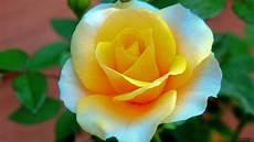 Flower Wallpaper Photo by Hd Flower Wallpapers 1080p Wallpapersafari