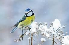Wildvogelf 252 Tterung Im Winter Tierschutz Land Steiermark