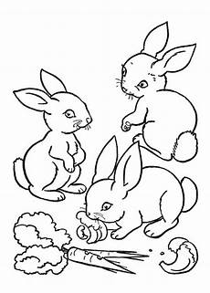 45 disegni di conigli da colorare pagine da colorare