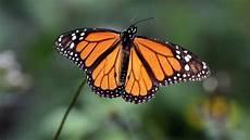 Malvorlagen Schmetterling Xing Kost 252 Mdesignerin Klebt Verletztem Schmetterling Neuen