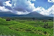 Gambar Pemandangan Sawah Dan Pegunungan Terindah