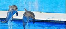 vasca privazione sensoriale quello devi sapere sui delfinari la dolphin
