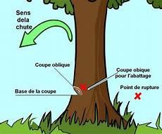 couper un arbre 12261 abattre un arbre du jardin 224 la hache ou 224 la 231 onneuse