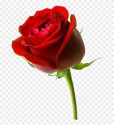 Gambar Bunga Mawar Merah Besar Hd 3d Free