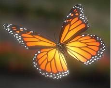 3d Model Animated Butterfly Cgtrader