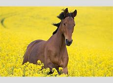 Horse HD Wallpaper   Background Image   2560x1600   ID
