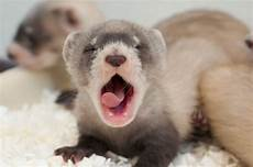 here are 29 animals you ll rarely get to see as babies