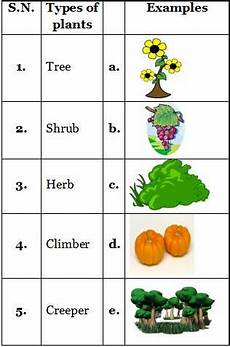 types of plants worksheets for grade 2 13744 types of plants practice sheets for science grade 2 cbse