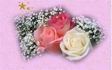 christmas roses roses wallpaper 16843968 fanpop